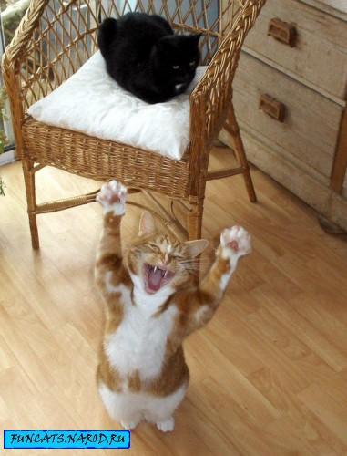 http://funcats.narod.ru/pc/21.jpg